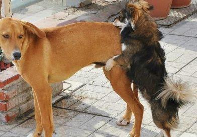 Por que meu cachorro monta outros cachorros?