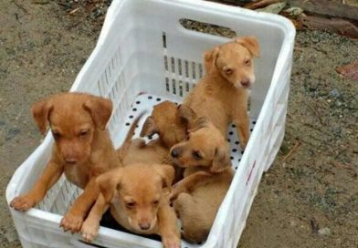 Como denunciar maus-tratos ou crueldade contra animais