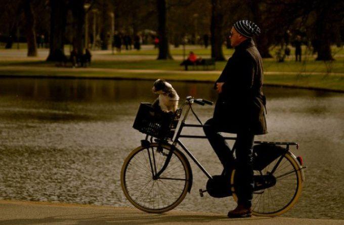 Como a Holanda zerou o número de cães de rua