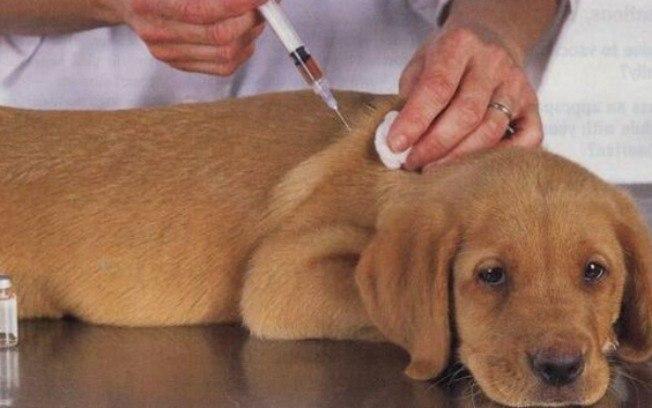 Saiba a importância da vacinação em cães e gatos